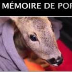 Maltraitance animale : Tout comme la corrida, la chasse doit être abolie