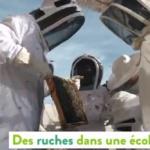 Environnement : Des ruches dans une école ? C'est à Genève que cela se passe