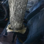 Étrange phénomène : Une voiture transpercée de part en part par un arbre