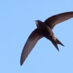 SCIENCE & VIE : Quoi de plus beau qu'un chant d'oiseau