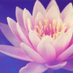 SCIENCE & VIE : Une femme reste une femme, un homme reste un homme et une fleur a un pouvoir incommensurable
