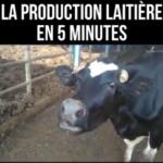Maltraitance animale : La production laitière en 5 minutes