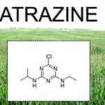 L'atrazine : Pesticide ultra dangereux et interdit en Europe continue à être produit en France et vendu dans les pays en voie de développement