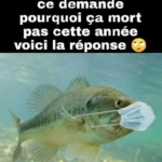 L'image du jour : Pénurie de poisson /  Image of the day : Fish shortage
