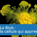 Science & vie : Le Blob, incroyable créature / Science & life : The Blob, an incredible creature